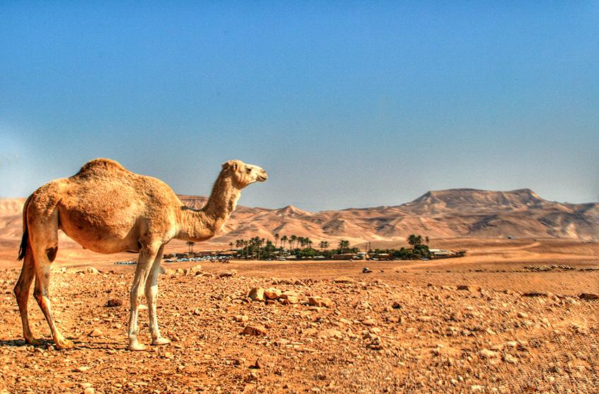 חאן במדבר - כפר הנוקדים