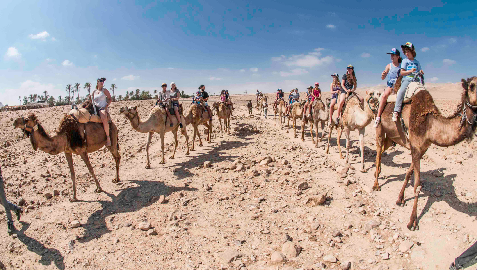 Family Camel rides