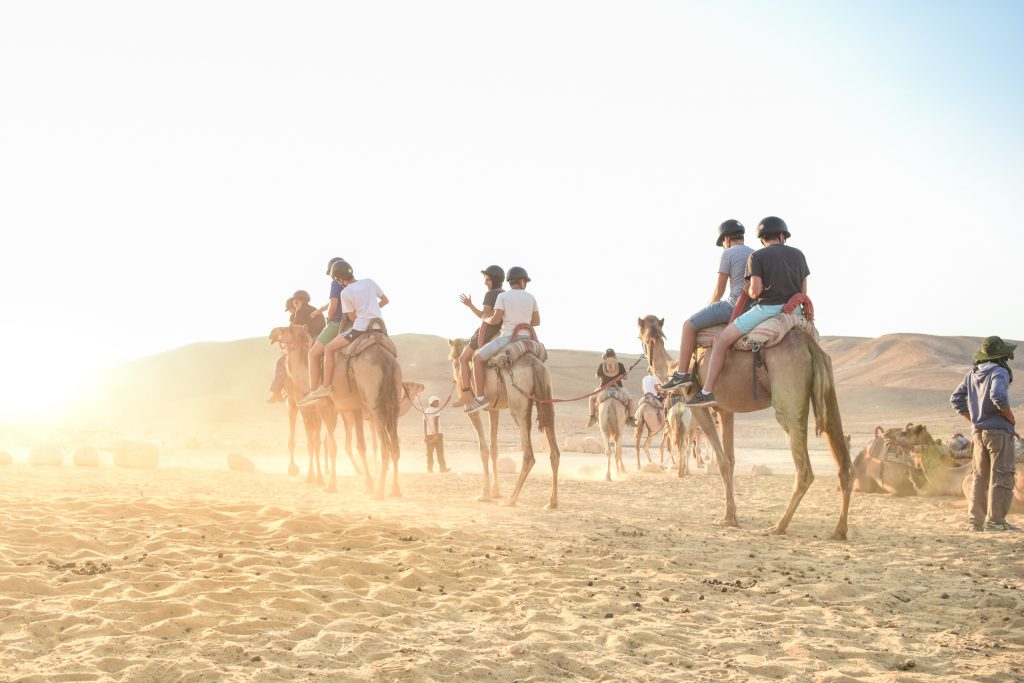 camel riding in Israel